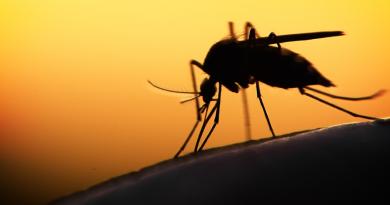 Governo de SP alerta para vacinação de febre amarela para quem vai para o litoral