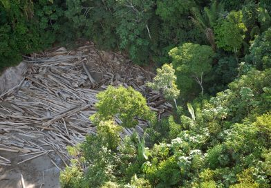 No governo Bolsonaro, 93% das multas por crimes ambientais na Amazônia deixaram de ser pagas